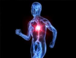 血液の流れ・水分代謝など循環障害を改善